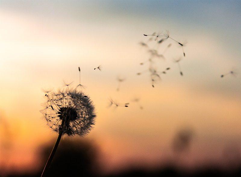 SerLibreMente | El Amor no duerme - Anthony De Mello